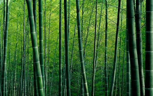 bamboos.jpg