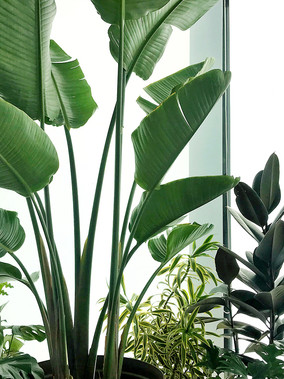 Houseplant Collecting as Self Care