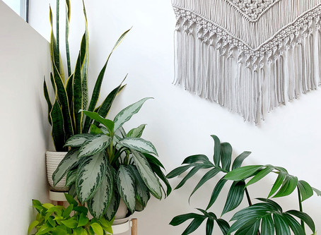Plant Styling 101