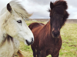 Horses of the Ring Road