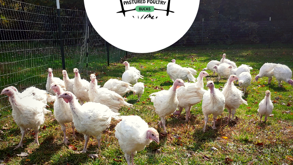 Pre-Order -Thanksgiving Turkey