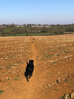 Max and Hactor corn field