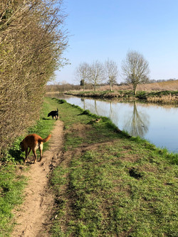 Max and Hector Canal