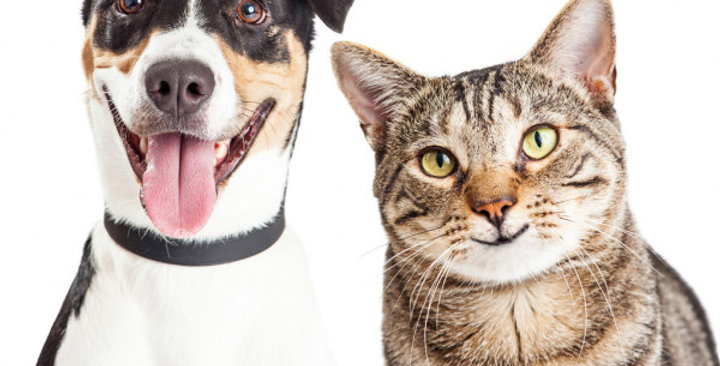 Pet Kennel Business and Residence – Central Queensland