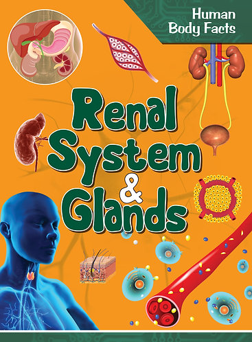 Renal System and Glands - Human Body Facts