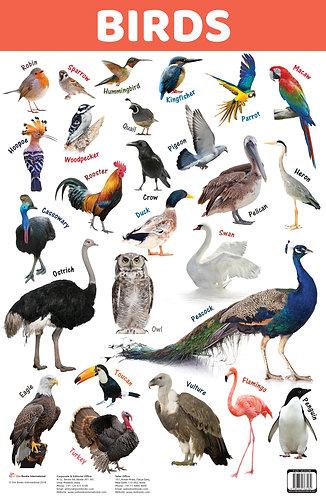 Birds : Charts