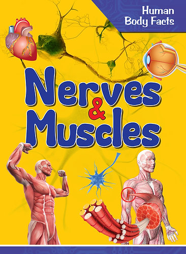 Nerves & Muscles - Human Body Facts