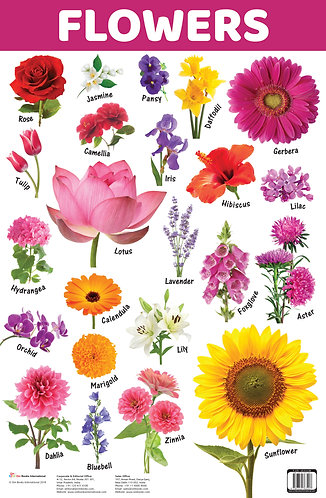 Flowers : Charts