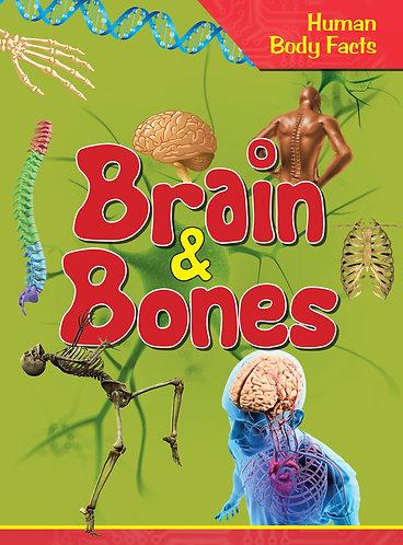 Brain & Bones - Human Body Facts