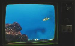 TV Land