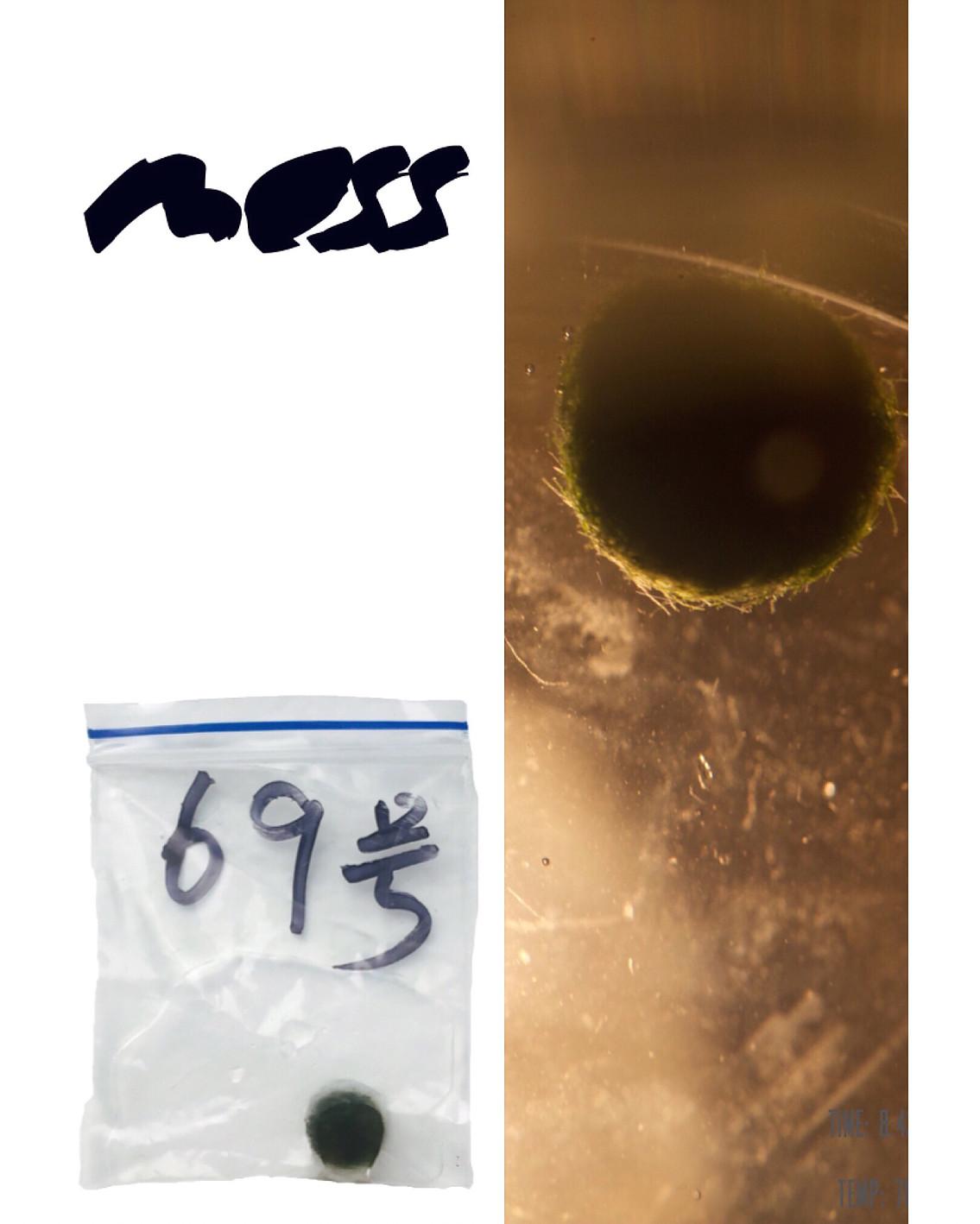 Moss zine