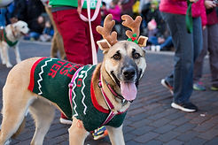 Reindog_Holiday_Parade.jpg