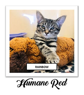 Humane Red Rainbow Square.jpg