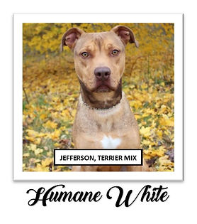Humane White for Square 2.jpg