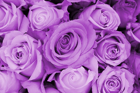 Purple roses in a wedding arrangement.jp