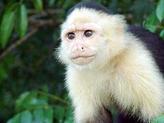 Local Panamanian Wildlife