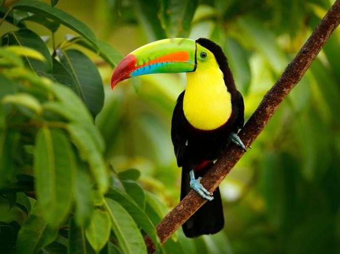 Local Costa Rican Wildlife