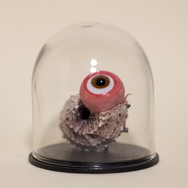 Specimen: See Shell