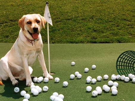 14th Annual Fore The Animals Golf Tournament