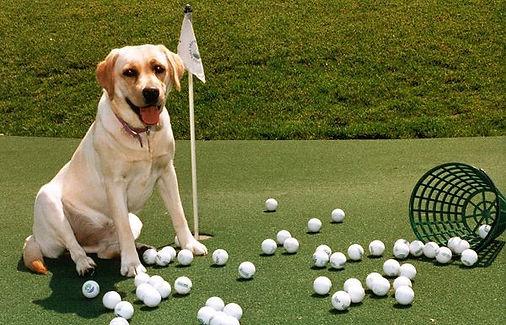 doggolf2.jpg