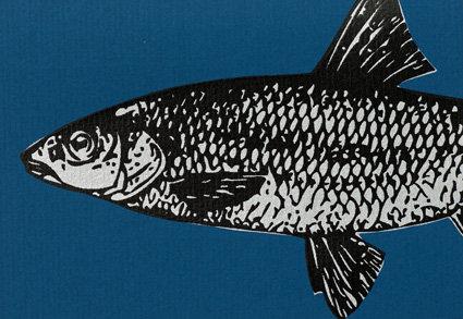 Karte A6 Fisch
