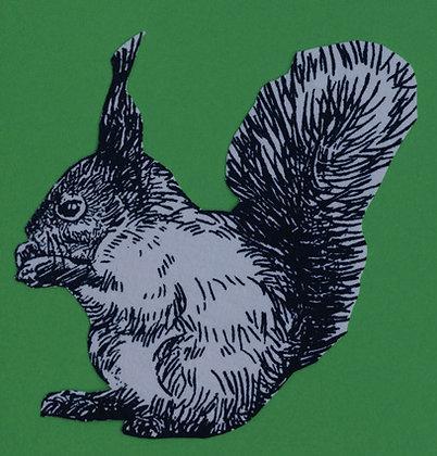 DraufGänger Eichhörnchen