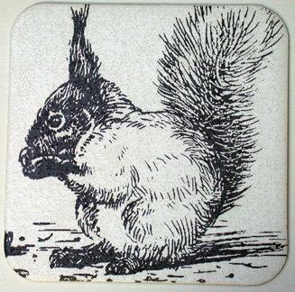 GlasTräger Eichhörnchen