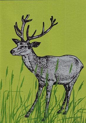 Karte A5 Hirsch im Gras