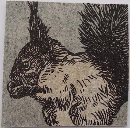 UnterTan hellgrau Eichhörnchen