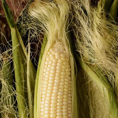 PRIVATO corn texture 2 .jpg