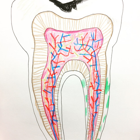 Tooth 1