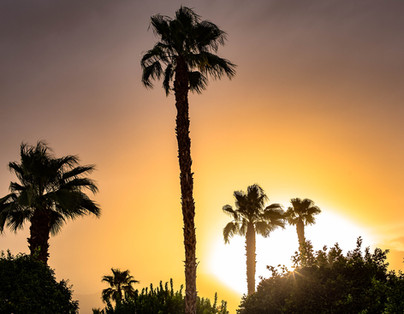 Moody Palm Springs