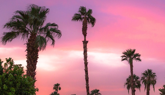 Palm Springs Breeze
