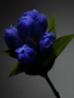 IMAGE_WEB_5.jpg