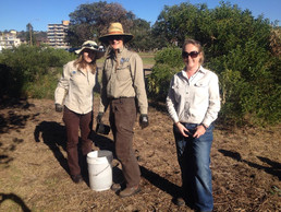Supported bush regeneration days in our local community