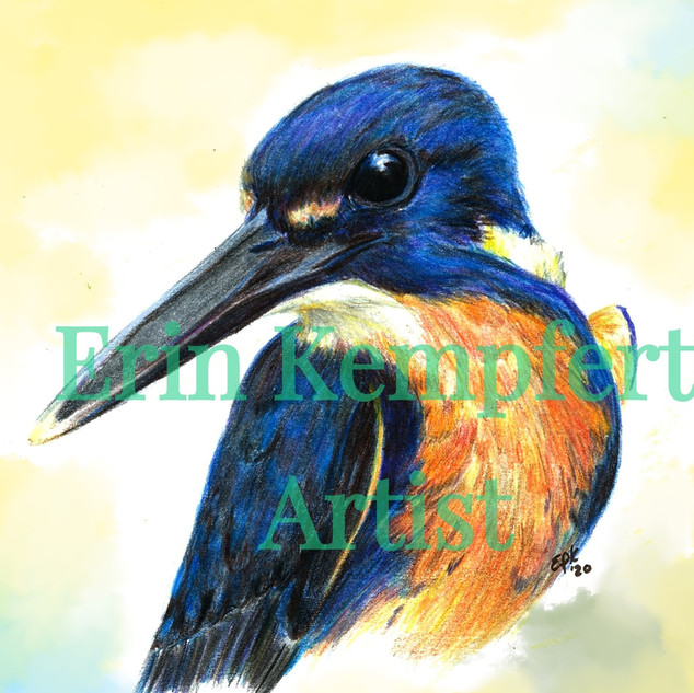kingfisher_coloredbackground_edited_edit