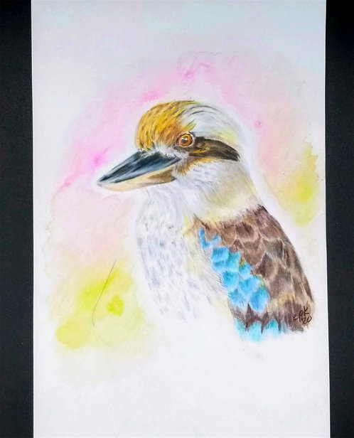 Laughing Kookaburra, Original colored pencil and india ink portrait 6x9
