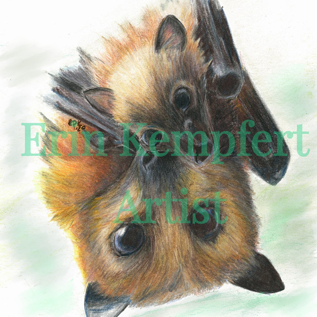 flyingfox_2_edited.jpg
