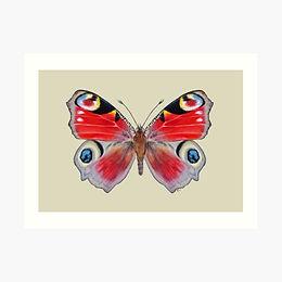 16x12 Premium Art Print Peacock Butterfly