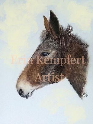 donkey1_edited.jpg