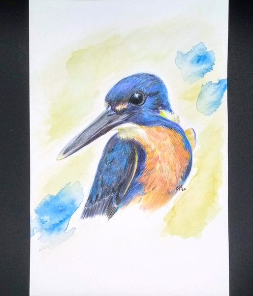 Tasmanian Azure Kingfisher Original colored pencil and india ink portrait, 6x9