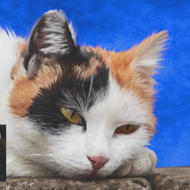 cat_digital_inset.png