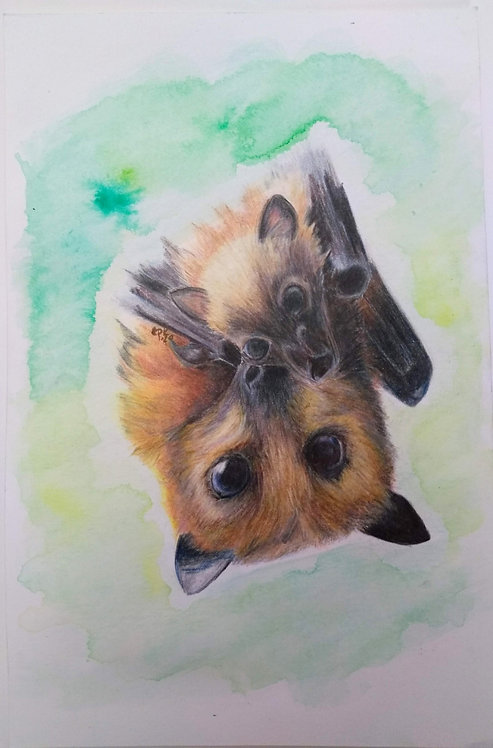 Flying Foxes Original