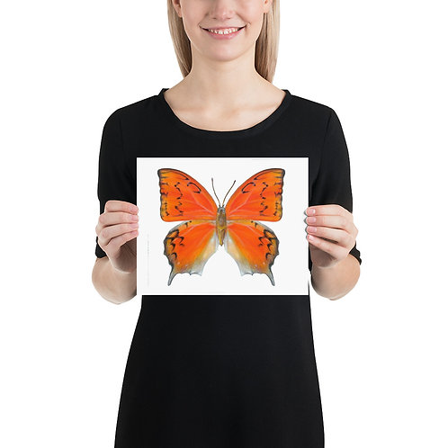 Florida Leafwing Butterfly Art Print
