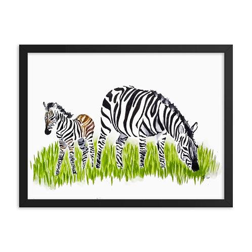 Zebra Framed Poster