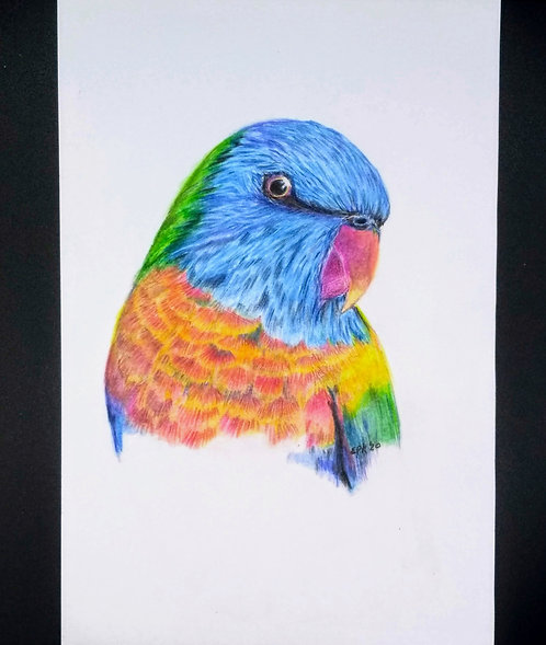 Rainbow Lorikeet Original Portrait, colored pencil and india ink, 6x9