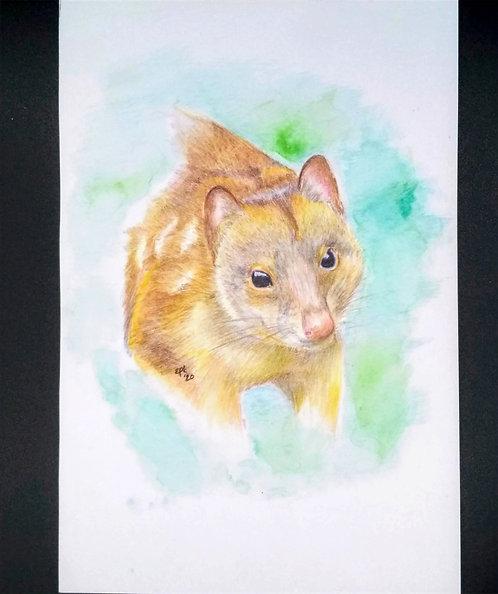 Tiger Quoll, Original colored pencil and india ink portrait, 6x9