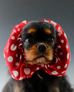 Dog Snood by Cindy Koehring