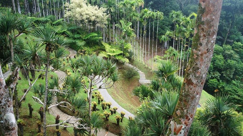 Illustration Jardin de Balata 2.jpg