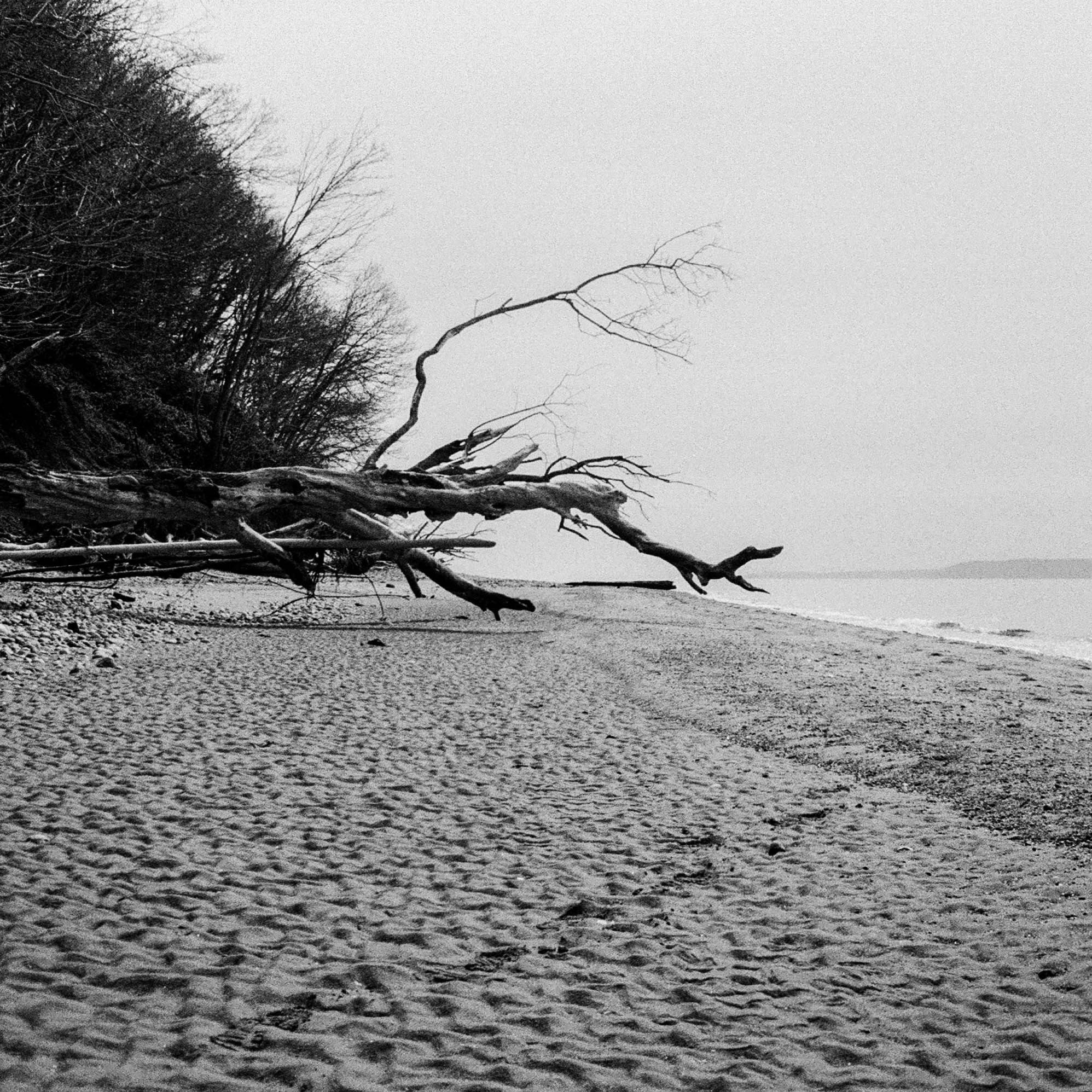 Beach with Fallen Branch